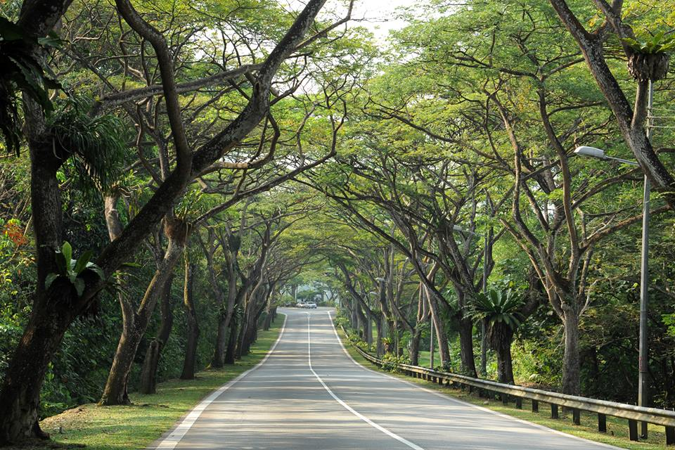 Take time to admire the beautiful rain trees that line Mandai Road, one of our five heritage roads. https://t.co/kYok4sjzkA