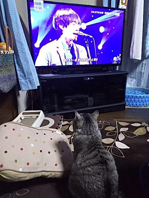 我が家の猫もスピッツ見てました #spitz https://t.co/D2smBZVItW
