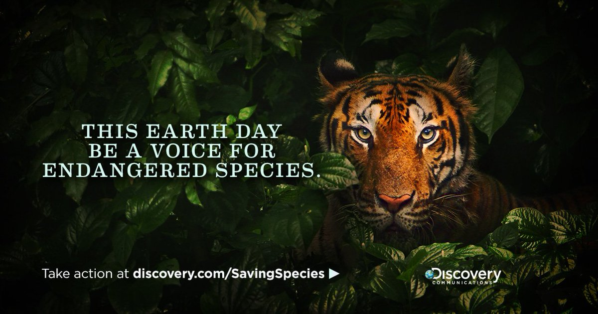 Endangered animals around the world need our help. Take action now: https://t.co/6pEQZ0vVDk #EarthDay https://t.co/WpHmUFNrnu