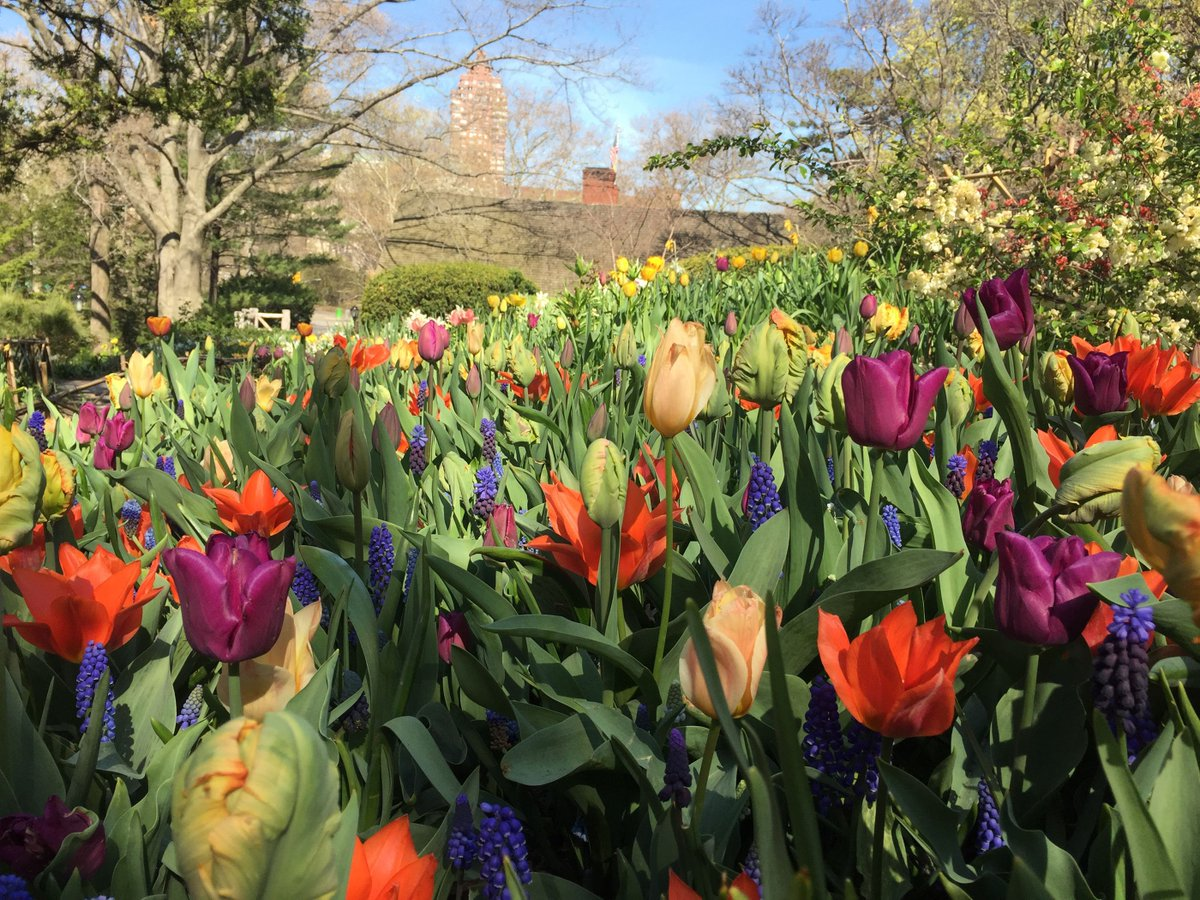 Happy 100th Birthday Shakespeare Garden! Stop by & wish one of NYC's secret gardens the best! #bringyourowncake https://t.co/4QUTBFi6Bf