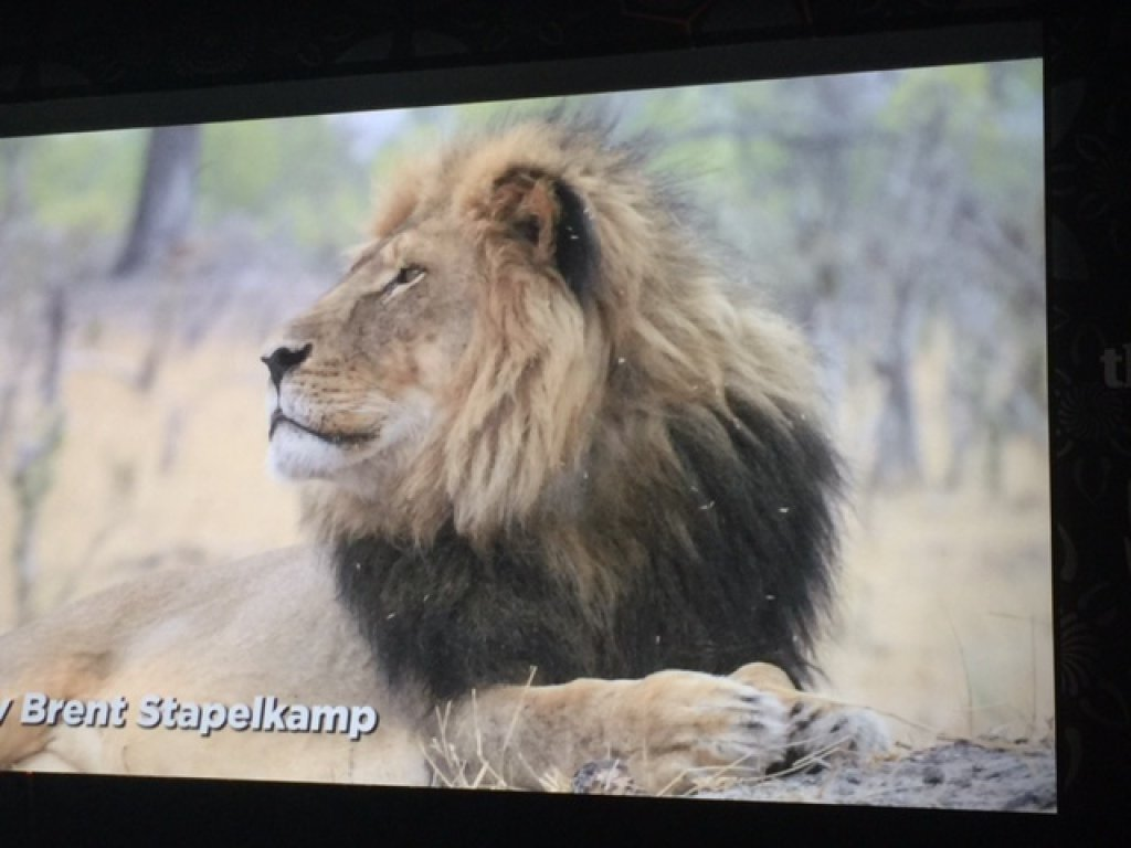 Thank you @brentstapelkamp for you heart-touching photos #CecilTheLion & @chatkoff for your passion #TDIA2016 https://t.co/ds1lHjyqeJ