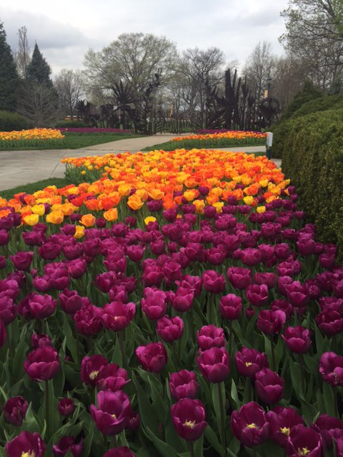 Last weekend for our Big Spring show and our 20,000 tulips are in full bloom! Open Sat 10a - 5p and Sun noon - 5p. https://t.co/f5ZJZI05vy