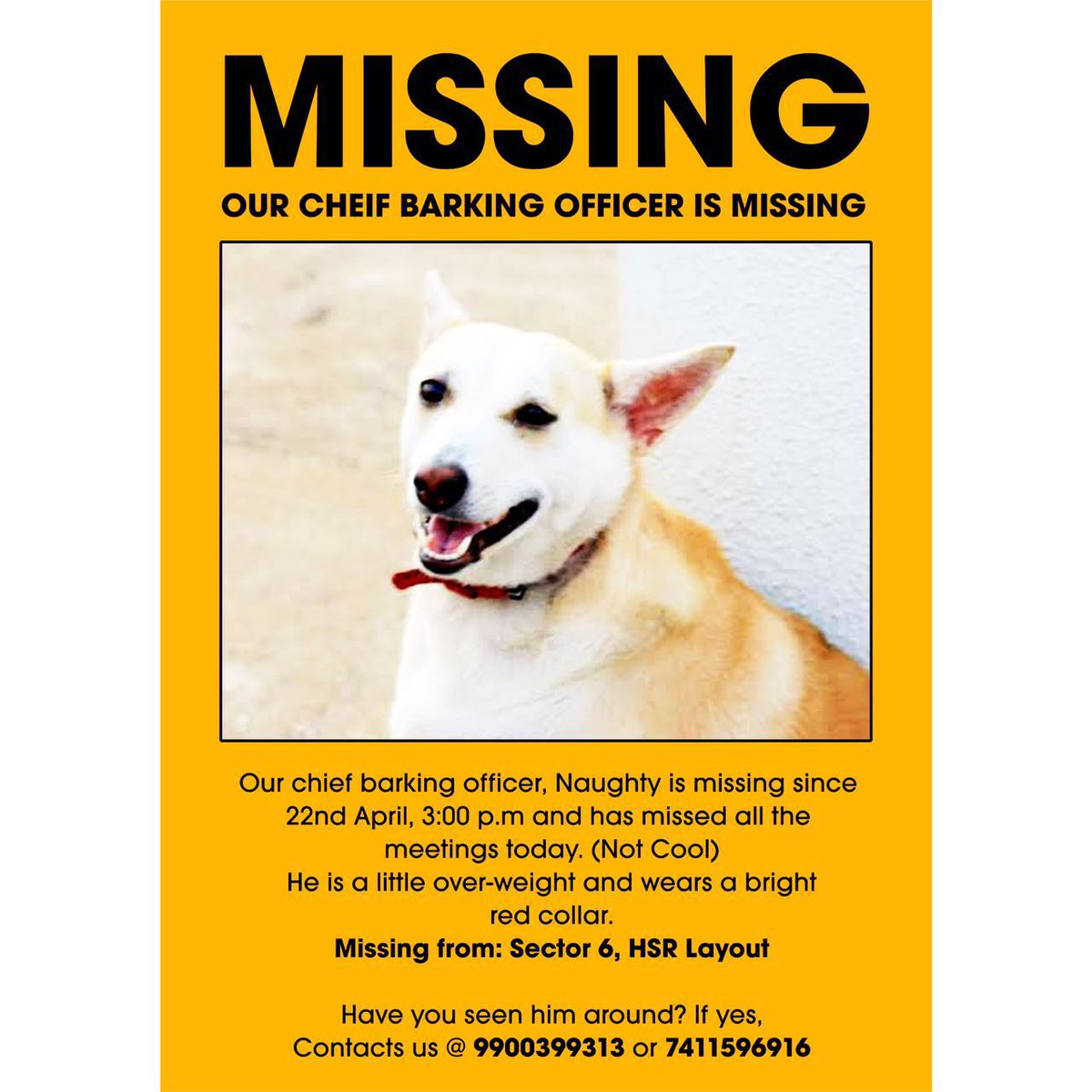 Our dog is missing. HSR, Blore. RT to help? https://t.co/uT7bDdMDzu