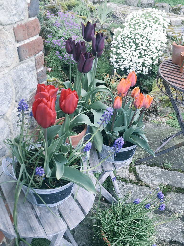 Tulips  #HomeGrown #PottingShedExports #NotmadeinHolland ???????????? https://t.co/ovp3KQAWT8