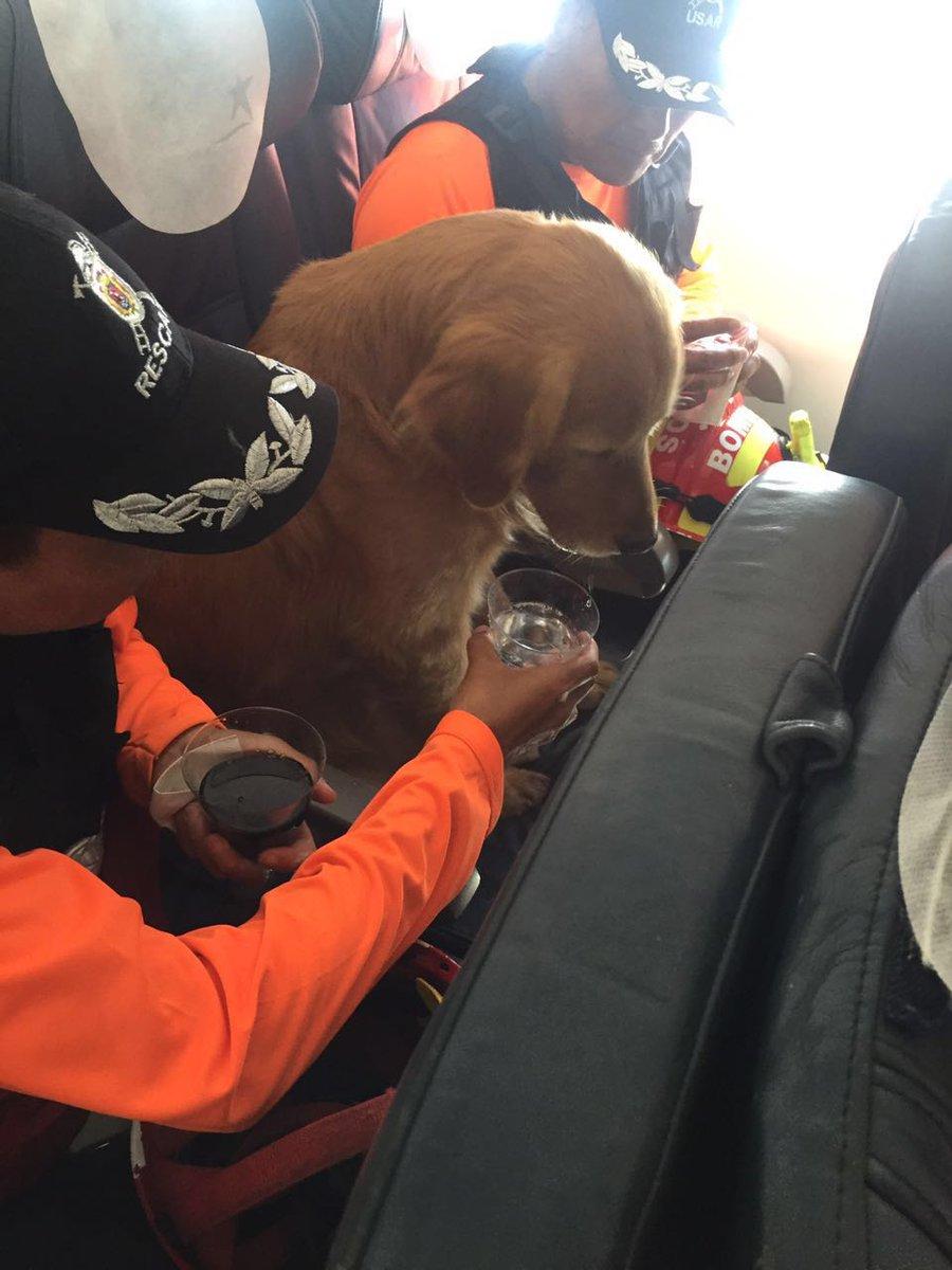 Una soberbia sacada de sombrero a LAN(próximo LATAM) por llevar a todo tipo de pasajeros…TODO TIPO https://t.co/Q0eomkDRAL