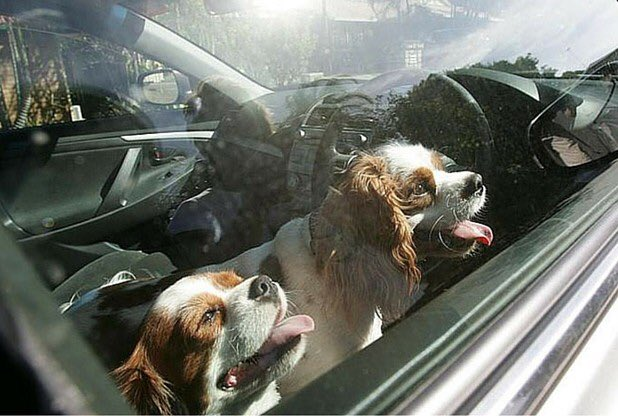 #Dogsdieinhotcars warning after puppies rescued from car near Exeter today https://t.co/Ftq52RDEUN @expressandecho