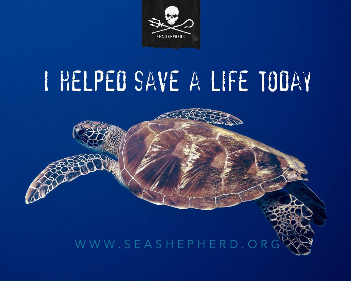 RT @SeaShepherdSSCS: Share this post to spread awareness about our new documentary + help save lives! #SeaTurtles https://t.co/bonFl1dJvA h…