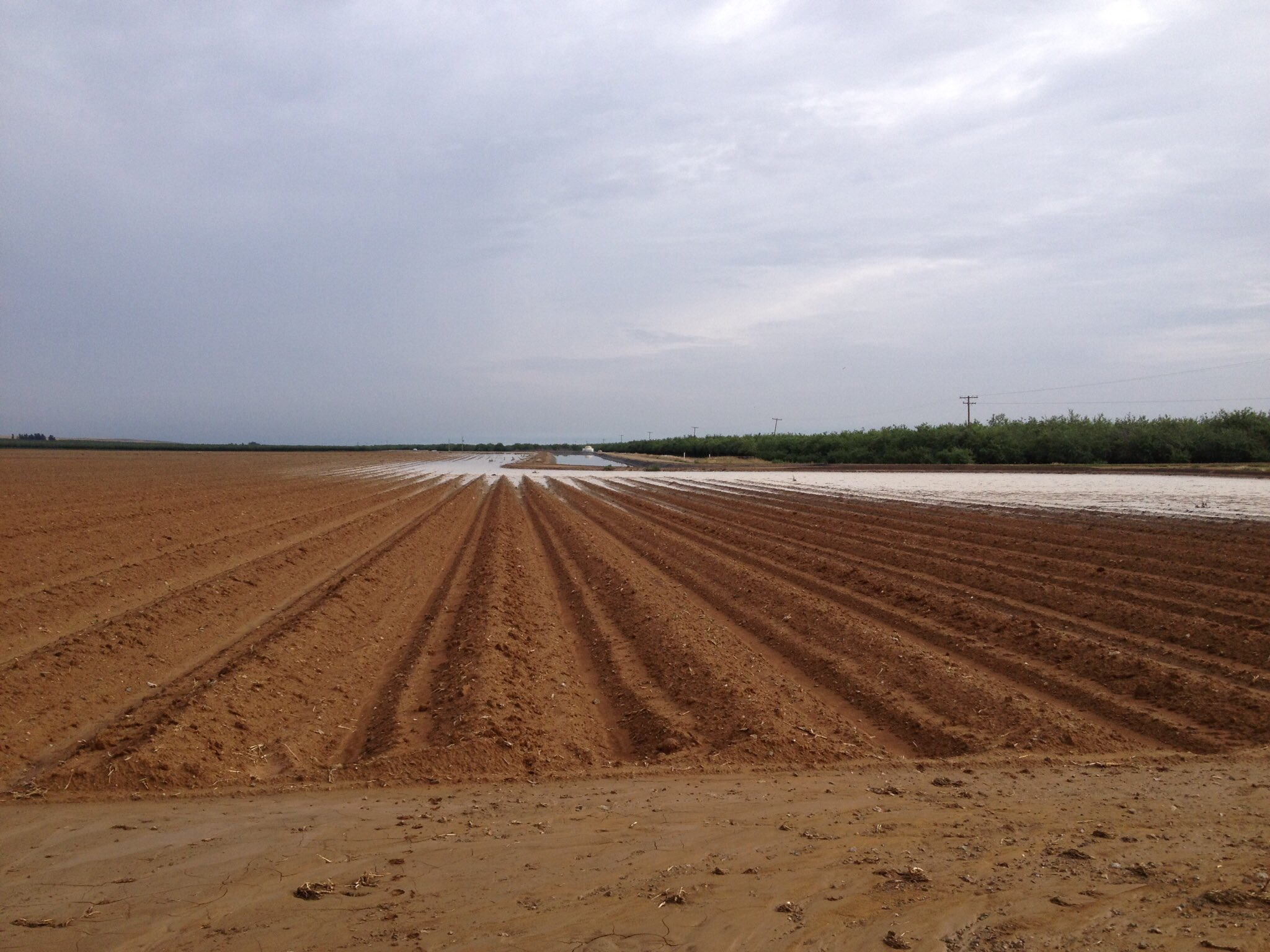 #Flooding on the #farm from Thursday's storm. #ElNino #SanJoaquinValley https://t.co/BYubZPO71R
