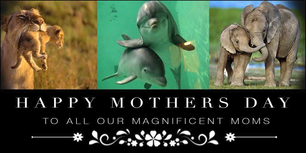 Happy Mothers Day to ALL the mothers in the world who love their children just the same. ???? https://t.co/NZXUAi8WWJ