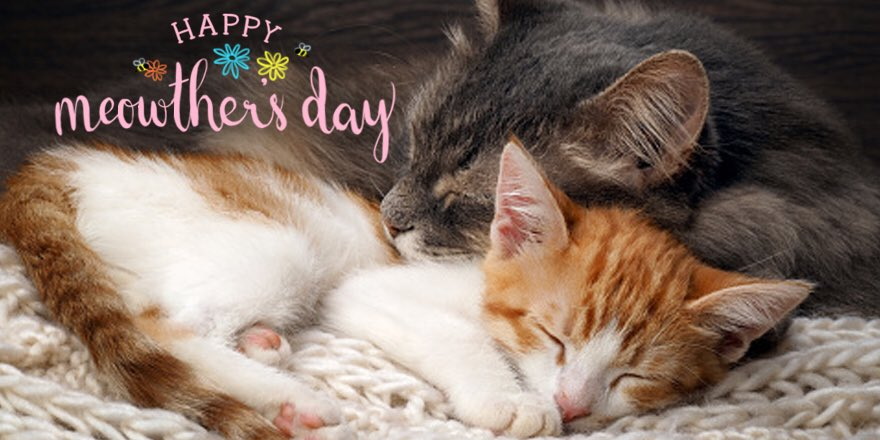 Today, let's not forget to celebrate all of the cat moms too. #MothersDay https://t.co/ctcwAn8tO2