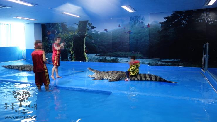 대전아쿠아리움에서 어린이들이 악어 등에 올라타 사진을 찍고 있습니다. 멸종위기종을 이용한 쇼는 교육이 아닙니다. 안전사고가 나기 전에 당장 악어쇼를 중단해야 합니다. https://t.co/8pnruaTc38 https://t.co/OUs4U03h0S