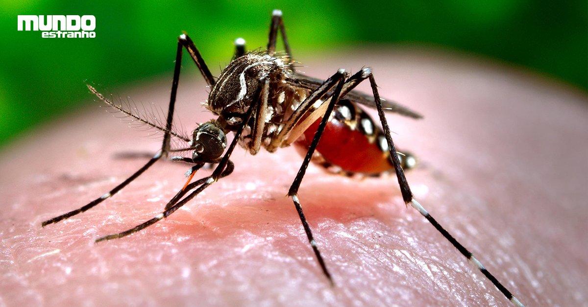 Como é a anatomia do mosquito da dengue? - scoopnest.com