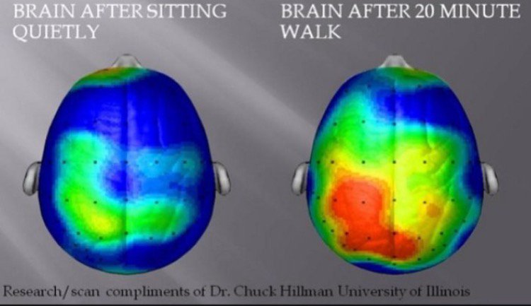 Left: Brain while sitting. Right: Brain after walking 20 mins. The mind-blowing benefits of walking meetings. https://t.co/HcF3HJCTwf