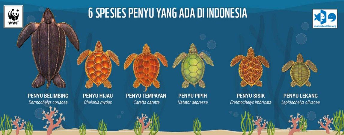 #Fakta Indonesia merupakan rumah bagi 6 dari 7 spesies penyu yang ada di dunia @WWF_ID https://t.co/KmlpRXT0ya