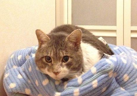保護猫のご案内(あさしお・わかめ・チャッシー・ナナコ・ラスク) https://t.co/uhDlG0cK3s 新着の家族募集のご案内です!  #保護猫 https://t.co/jw4FMgeDdX