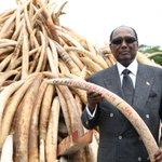 I was at @kwskenya today to give my support towards the ban on ivory trade. @BrandKenya @MaryLuseka #WorthMoreAlive https://t.co/BRc36L1vbm