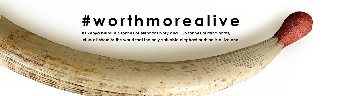 Thunder Clap it! Add your voice, shout to the world our wildlife is #WorthMoreAlive. CLICK https://t.co/LG0HYUT9F0 https://t.co/9ChA0J4Qh9