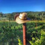 Good morning! #ehlerslove #organic #estate #NapaValley #winelover #wine #historic #farm #NapaValley #april #spring https://t.co/S9xOH2K6r1