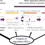 A detailed accounting of genotypic effects from chromatin to protein; and on mRNA splicing: https://t.co/pHd5oxCfUL https://t.co/aUdkSCcbNB