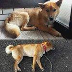@_kusyan_ [探してます]#拡散希望 #迷子犬:9/17 #岡山県 #倉敷市 亀山より#雑種 雄が逸走赤い首輪立ち耳で困り顔の男の子あまり人慣れしてない為声などかけると逃げてしまいます。周辺でお心あたりないですか!#迷い犬 https://t.co/6BPu0jL1BP
