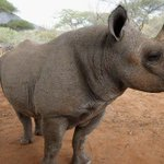 Theres NO medicinal value in rhino horns.Theyre made of keratin, same protein found in fingernails #worthmorealive https://t.co/ZKbSeKZLn6