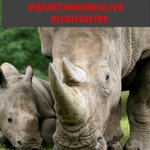 Did you know that Kenya is home to the 3rd largest rhino population in the world! #worthmorealive https://t.co/bXJkedC5EQ