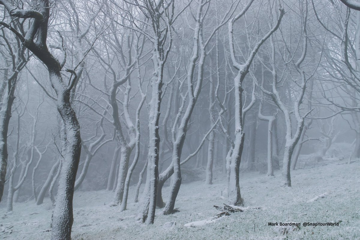 A misty & snowy Macclesfield forest at 7am this morning @bbcweather #uksnow https://t.co/xqPb65Ckyp