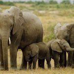Happening now: #GiantsClub Summit: Forum aimed at developing a continent-wide response to trade in illegal-wildlife https://t.co/V1N25rP9eZ