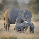 #AmHappyBecoz The elephant can survive only if forests survive. ~Mark Shand~ #GiantsClub #WorthMoreAlive Wenger https://t.co/xdFWj5bBgi