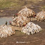 There is no excuse for such greed & cruelity in the expense of our wildlife. They are #WorthMoreAlive https://t.co/hVx5WvNAoj
