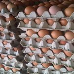 Cartón de huevos llegó a Bs 3.000 y el kilo de carne a Bs 2.800 https://t.co/w98lSAkOUD https://t.co/yVIXhzOA8m