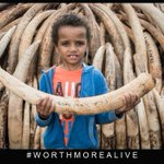 Lets speak for those without voices, lets save our Elephants & Rhinos from extinction. #WorthMoreAlive https://t.co/vXkUrAsr8W
