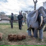 A demo on how farmers use Chilli bombs to protect their farms from elephants by @SpaceforGiants #GiantsClub https://t.co/eumWBZf2hP