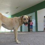 Cachorro está há dias na porta do Tarcísio Maia à espera do dono que faleceu https://t.co/oM6sOR4F2r https://t.co/yjXCq4FogE