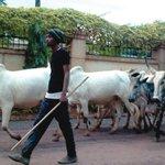 Ranching will end Fulani herdsmen/farmers conflict − poll https://t.co/S0404mE1aL https://t.co/pYpegmJS90