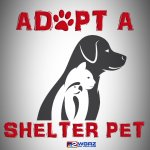 Its #NationalAdoptAShelterPetDay!  Here are some shelters that have animals available.    https://t.co/1KPv15oNJC https://t.co/hwmYerF2qA
