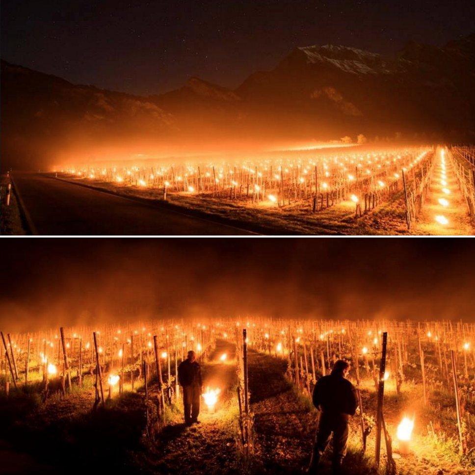 Comme à Chablis, les vignerons suisses tentent aussi de protéger leur vignoble du gel... https://t.co/nelhTYNcmo https://t.co/lCsNntOEJ9