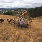 Comunidad de Rapa,  Temuco, región de La Araucanía, febrero de 2016. @memoriacampesin @HistoriaMapuche https://t.co/ZwSA0OUvwu