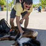 Destress with therapy dogs from 6-7pm May 1, 5-8pm May 2 and 5-7 pm May 3, 2nd-floor library. https://t.co/Tpgj5ZYFHy