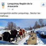 #CongestiónAlEstiloDelSur :para que todo #Chile vea, cómo es la hora del Taco en #Lonquimay #Araucanía @soytemuco https://t.co/ZnrGtl0Bw8