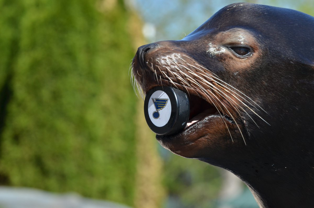 @DallasZoo @StLouisBlues Challenge accepted! Even our sea lions know how to handle a puck better than @DallasStars https://t.co/2peTlAr4jt