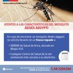 Colabore con el control del Aedes aegypti https://t.co/hAjDvcBIqv