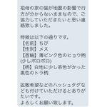 家族を探しています。 みなさんのご協力をお願いいたします。 熊本県宇治市付近だと思います。 #熊本ペット #拡散希望 https://t.co/GmKCMsNDkp