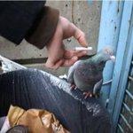 diga não as drogas cigarro mata cuidado com as más companhias https://t.co/ijfTN4CbQF