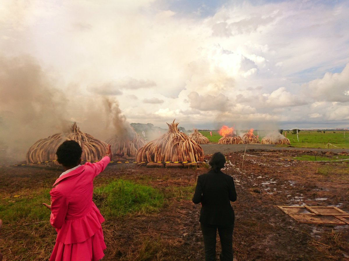 And up they go, our stand is clear, they are worthless unless they are on our Elephants & Rhino's #WorthMoreAlive https://t.co/wFoTOzp4AQ