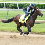 Exaggerator, Brodys Cause work 5 furlongs for #KyDerby, Weep No More breezes https://t.co/342rxWzF1y (Coady Photo) https://t.co/jKVxqvEj14