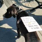The dogs in Somerville know whats uuuupppp.... #DivestTheVille #Lemonade https://t.co/Q9hACYGeen