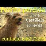 #sevillahoy #sevilla #perritoperdido #difusion #difunde !!! @lasextahuella @AnimalPerdidos @AnimalesSevilla https://t.co/FamqqzQXLu