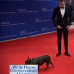 Carrie Fisher's dog is attending the White House Correspondents Dinner https://t.co/zrT2URvIKt