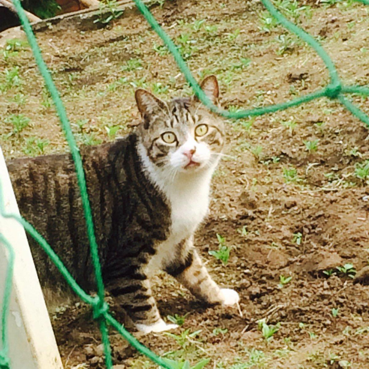 学校園で出会ったものすごくビックリした表情のネコ https://t.co/22JstbgGOY